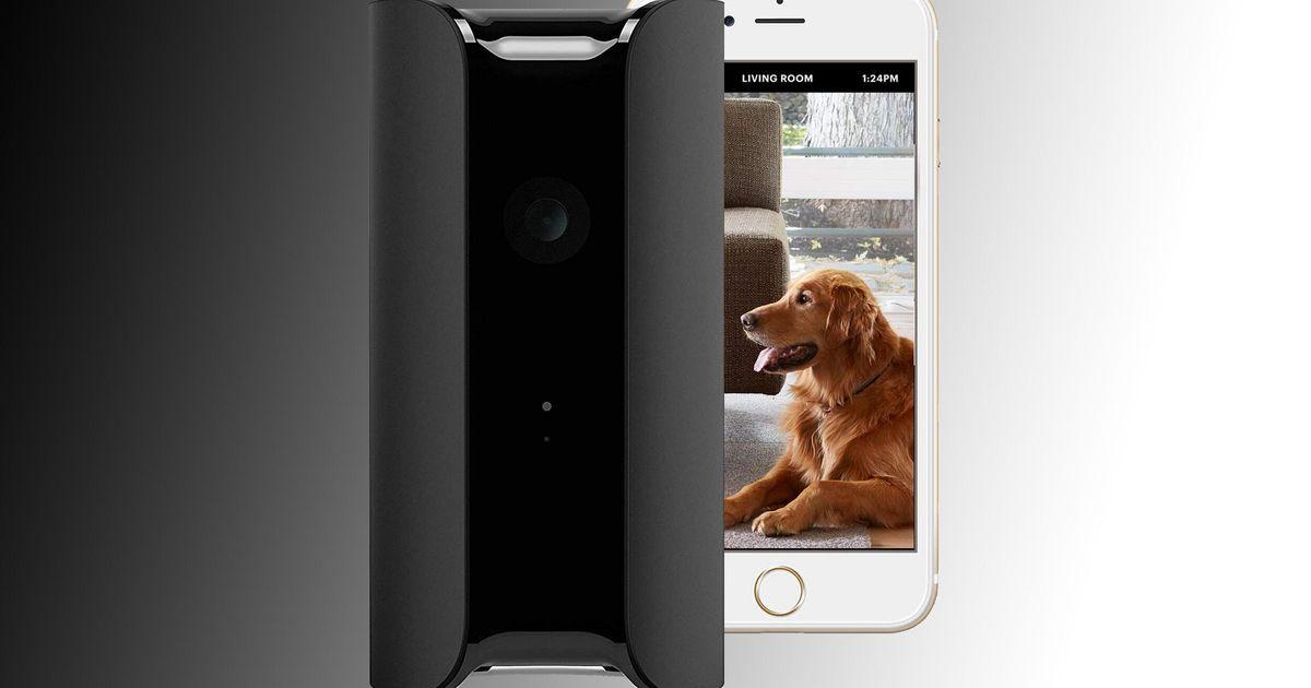 Obtenga una cámara de seguridad para el hogar Canary por $ 49 más comida para mascotas a domicilio con un 50% de descuento