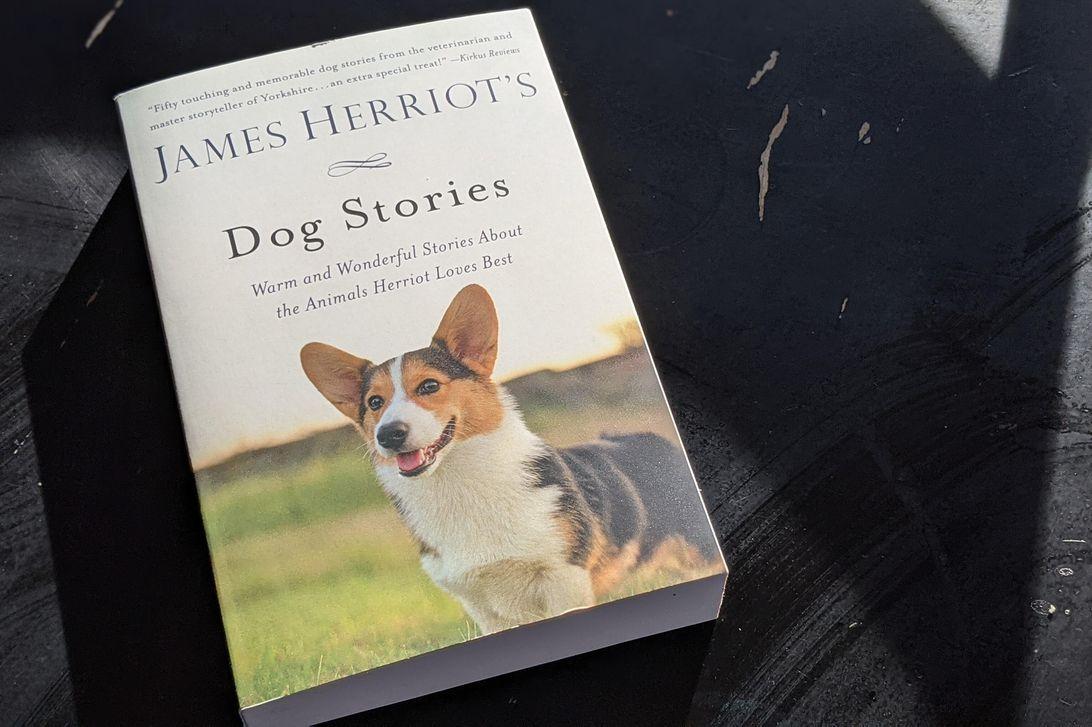 cuentos de perros