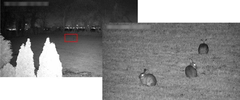 CCTV de Hikvision - Observación de conejos